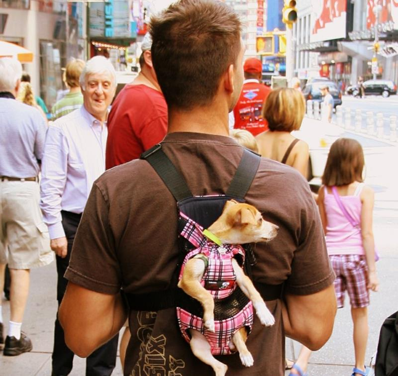 25 Pictures Proving New York is the Craziest-20