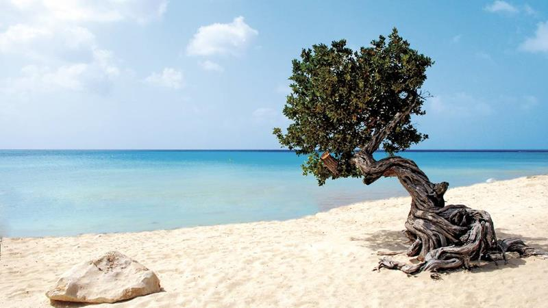 17 Beaches To Visit While In Aruba-9