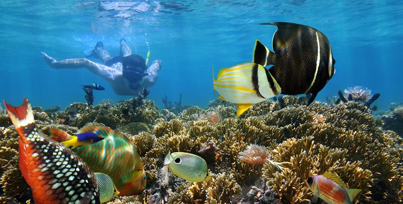 24 Best Snorkeling Spots in the Caribbean-21