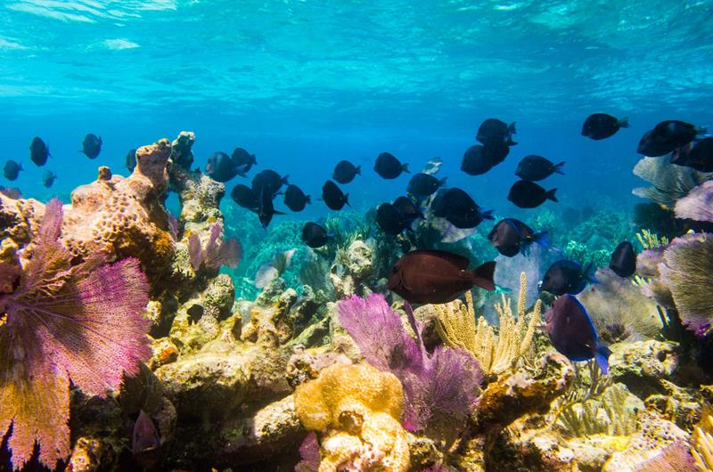 24 Best Snorkeling Spots in the Caribbean-22